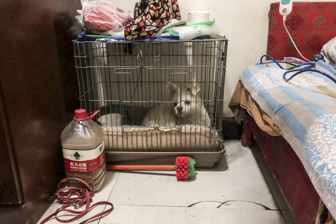 小白是李秀华养的一只流浪狗,仍乖乖地趴在铺着粉色垫子的铁丝笼子里。