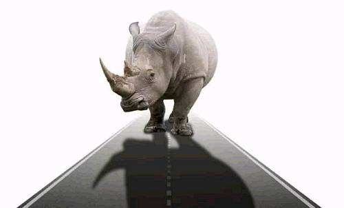 """gray rhino: how to recognize and act on the obvious dangers we ignore""的图片搜索结果"